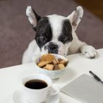Best Pet Food Products