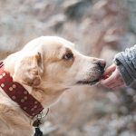 Top 5 Ways to Strengthen your Dog's Bone that Effectively Works